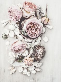 roses & seashells {pretty color palette}