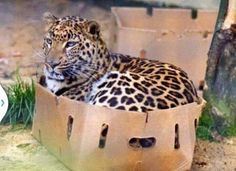 Big kitty in a box