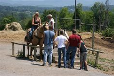 Deer Farm Riding Stables in Sevierville, TN!