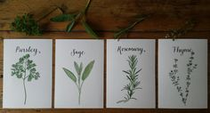 Alice Draws The Line :: Illustration, Hand Lettering and Bespoke Commissions: Parsley, Sage, Rosemary and Thyme