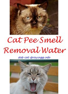 8 Best Urine Remover Images On Pinterest Cleaning Hacks