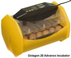 Octagon 20 Advance - digital menu driven incubator calibrated from factory with digital temperature and humidity readout but also high and low temperature alarm; comes with the autoturn cradle