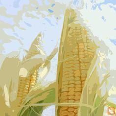Productividad del maíz como estabilizador de precios.    En México existen más de 2.3 millones de unidades de producción de maíz en condiciones de temporal, de las cuales 724,000 se encuentran subutilizadas, toda vez que el rendimiento actual es mucho menor al potencial. Esta superficie representa 32% del total sembrado de maíz, mientras que la producción generada en esta superficie representa 13% del maíz nacional.    http://logisti.co/MgE6m5