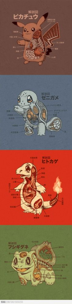 Pokemon Anatomy idk what this says but i like the idea!!