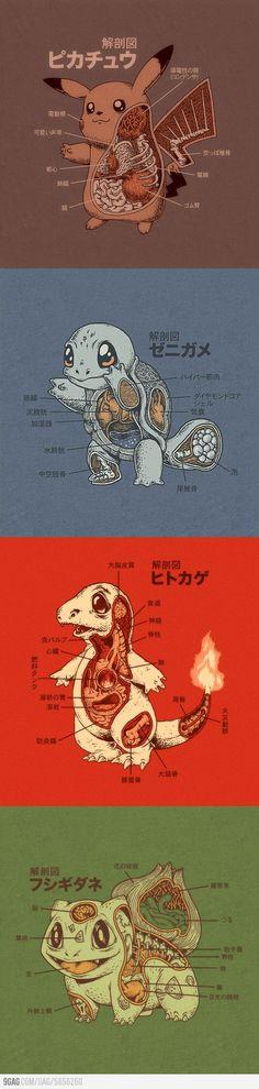 Anatomía Pokémon