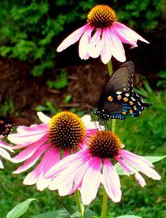 Butterfly on BB Farm