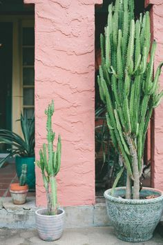 Potted Cacti. Want these in my future house