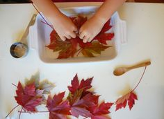 Fall Crafts: Glycerin Leaves // & iron leaves between wax paper sheets Autumn Leaves Craft, Autumn Crafts, Nature Crafts, Home Crafts, Diy And Crafts, Crafts For Kids, Arts And Crafts, Fall Leaves, Diy Projects To Try
