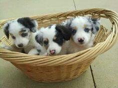 #puppies #animals #AnimalPhotos #LoveAnimals