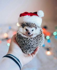 Pin by candice weber on hedgie love маленькие ёжики, ежики, Baby Animals Super Cute, Cute Little Animals, Cute Funny Animals, Baby Animals Pictures, Cute Animal Pictures, Animals And Pets, Baby Hedgehog, Tier Fotos, Cute Creatures