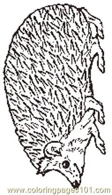 The Mitten Mural Hedgehog Coloring Page Coloring Page