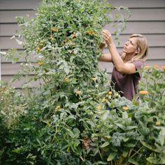 Garden Metal Garden Trellis, Arch Trellis, Cedar Garden, Trellis Ideas, Container Gardening, Gardening Tips, Growing Marigolds, Cattle Panels, Kitchen Herbs