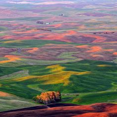 This picture is a great reminder of why, even though I'm glad to be back in Wyoming, I really miss the Palouse sometimes.  It has some great colors to decorate an office or spare bedroom around.
