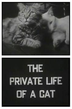 experimental film   1944   Maya Deren, Alexander Hammid