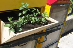 Guerrilla Gardeners Attack Empty Flyer Boxes With Minty Goodness