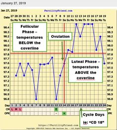 Learning how to track basal body temperature (BBT) is so easy and can help predict ovulation so that you know when to BD each month! Basal Body Temperature Chart, Pregnancy Chart, Baby Dust, Female Fertility, Pregnancy Looks, Trying To Conceive, Family Planning, How To Know, Pregnancy