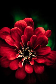 beautiful red flower....
