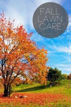 Fall Lawn Care - the details you need to know for the upcoming season change! Reseeding Lawn, Fall Lawn Care, Lawn Care Business, Pergola Pictures, Garden Shower, Country Chic Cottage, Pergola Shade, Garden Care, Pergola Designs