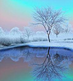 A Winter Reflection. [pixdaus.com]