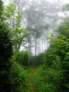 Sentier en forêt.