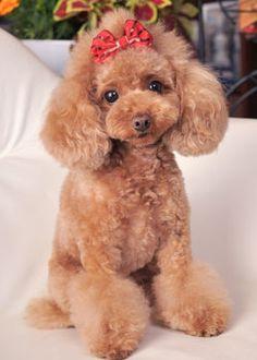 ビジュ・アレンジ --愛犬の友 ヘアスタイルカタログ--