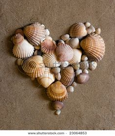 Good idea, my kids bring in tons of shells during the summer. for canvas board