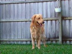 Learn how to create a comfortable outdoor kennel for your dog on our blog #Dogs #Kennels #Tips