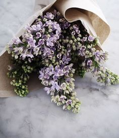 Gorgeous little lilac flowers in a bouquet My Flower, Fresh Flowers, Spring Flowers, Wild Flowers, Beautiful Flowers, Purple Flowers, Purple Lilac, Lavender Flowers, Cactus Flower