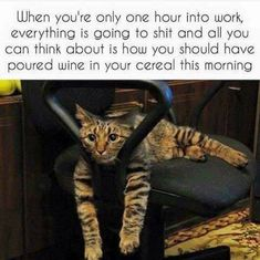banking humor Pampurr Yourselves With Twenty-Five Caturday Cat Memes - I Can Has Cheezburger Cat Quotes, Work Quotes, Sarcastic Quotes, Funny Quotes, Bank Humor, Funny Cat Memes, Funny Cats, Funny Stuff, Corona