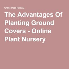 The Advantages Of Planting Ground Covers Online Plant Nurseryfamily