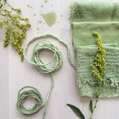 Rebecca Desnos: Goldenrod flowers picked early in the season produced green dye. The dye gradually turned from yellow to green over the course of 24 hours in an aluminium pan Shibori, Natural Dye Fabric, Natural Dyeing, Goldenrod Flower, How To Dye Fabric, Dyeing Fabric, Nature Crafts, Fabric Painting, Creations