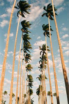 Take me to the palm tress...