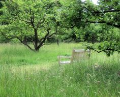 Haveplan til den vilde have | GardenDoctor
