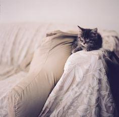 Kitten Naps Again