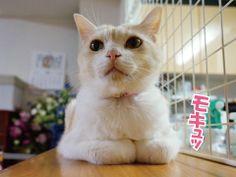 猫の手の置き所|うにオフィシャルブログ「うにの秘密基地」Powered by Ameba