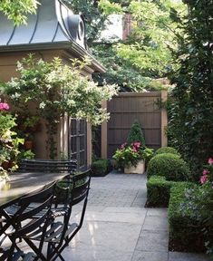 Love this small patio space with well trimmed shrubs, garden gate and beautifully shaped patio tree
