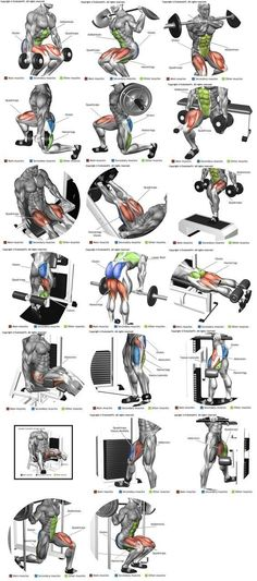 Perna ( quadríceps, bíceps femural, adutor e abdutor) (Fitness Workouts Abs) #musclebuilding #fitnessworkouts