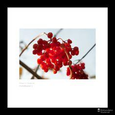 cool Fotografie »Herbstbeeren 3«,  #Herbst #Naturansichten