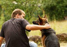 Te contaremos algunos consejos para tener un perro tranquilo ya sea cuando estás a su lado o cuando se queda solo. ¡Son muy efectivos!