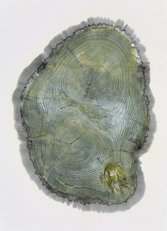 Beautiful Photos Of Tree Rings Remind Us To Slow Down A Little | Co.Exist: World changing ideas and innovation