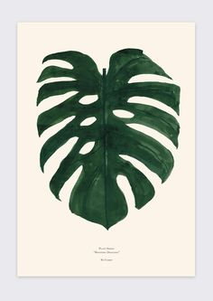 Plant Series Monstera Deliciosa The first poster in our Plant Series. The Plant Series is an ongoing poster series ofvarious plants, leafs and flora. Wate