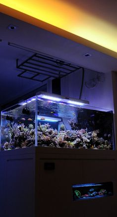 """Possibly my favorite setup of all time. SPS main display tank with 2 LPS display """"refugiums"""". amazing."""