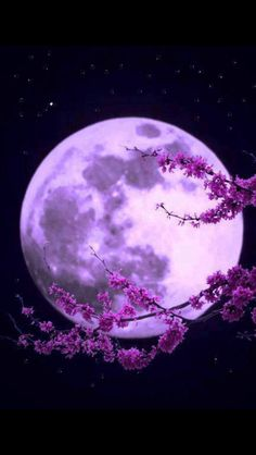 Gorgeous Purple Moon