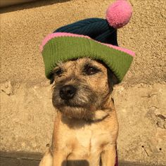 Jack in a hat! #border #terrier