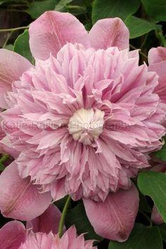 Floral Photo Print Garden Art Flower by katierailtonphoto