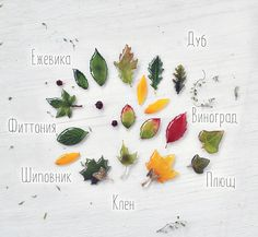 brooches with real autumn leaves. oneflowerstory. resin jewelry