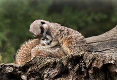 Family time! by Sue Demetriou, via 500px