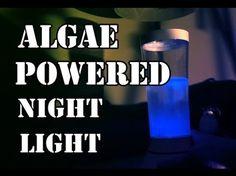 Algae powered light.