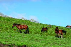 Horseback Riding – Peneda-Gerês National Park CC BY-NC-ND - TURIHAB