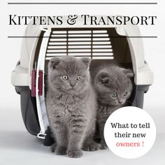 [BLOG] Kittens & Transport: What You Must Tell Their Owners - BREEDER PRIVILEGE PROGRAM